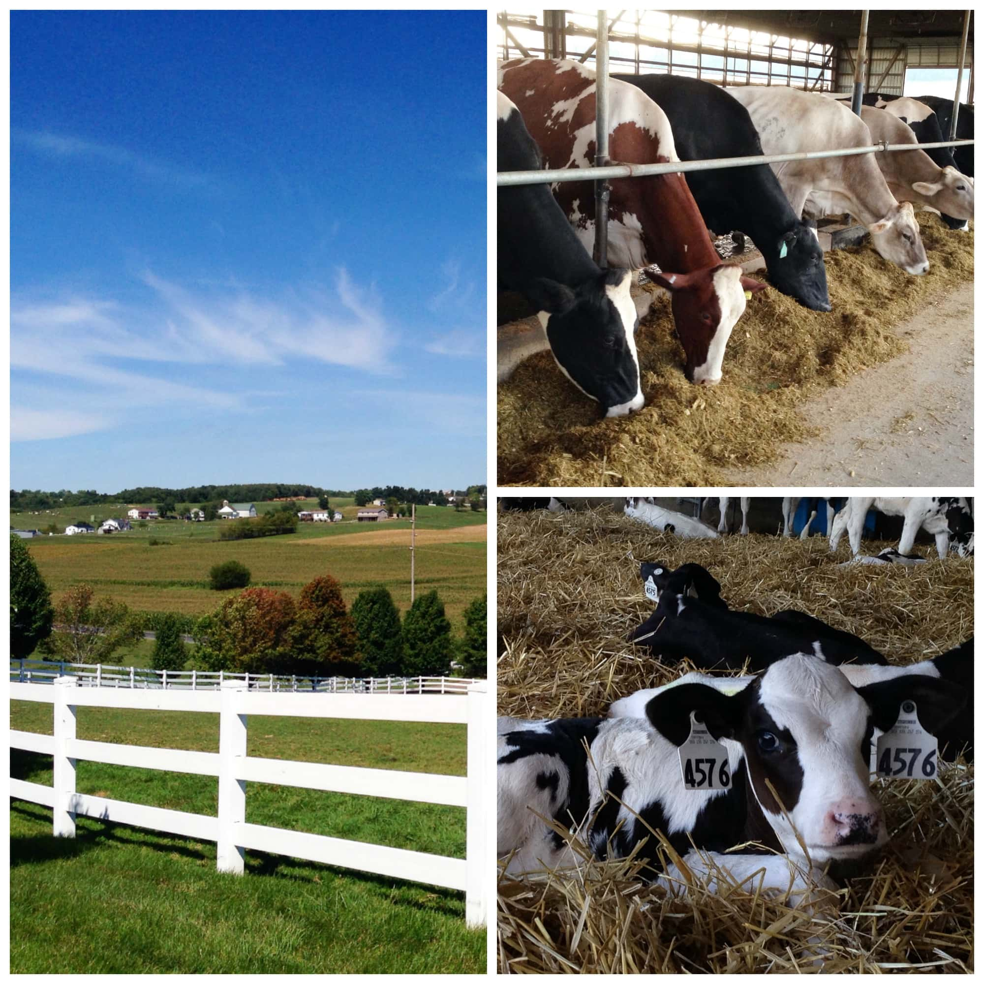 American Dairy Association Mideast Trip